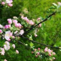 Когда цвели сады... :: Валентина Данилова
