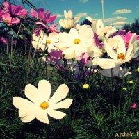 Цветки :: Arshak Badalyan
