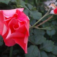 Нежная юность... :: Тамара (st.tamara)
