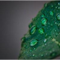 Прислушайся: капли дождя стучат по стеклу и по листьям... :: Александр Вивчарик