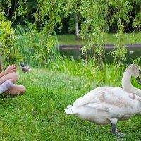 Девочка и лебедь :: Юлия Жорова