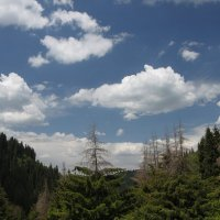 а облакаа... белогривые лошадки) :: Свет Какоткина
