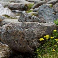Река, камни и цветы :: Pavel Stolyar