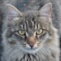 Котя! :: Алексей Бубнов