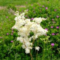 цветок :: владимир Баранов