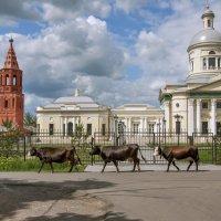 Никольский собор. Епифань :: Anastasia Bozheva