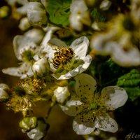 Пчел - трудовичок :: Лёша