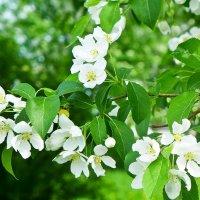До следующей весны, милые мои... :: Стил Франс