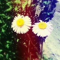 Цветочки :: Анна Y-Blare