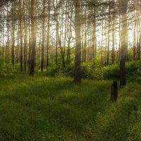 яркий лес :: Илья Костин