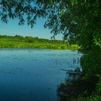 Лето у реки Остёр | Лето 2015 | Summer2015 :: Павел Данилевский