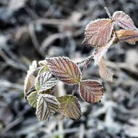 Дыхание зимы :: shvlad