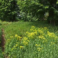 Пора цветения :: val-isaew2010 Валерий Исаев