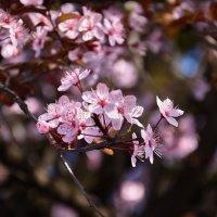 Весна в Сочи :: Сергей Кучеренко