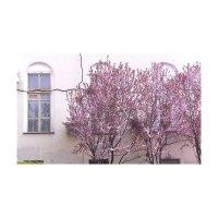 Весна :: Настя Левченко