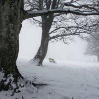 стоим в тумане :: Elena Wymann