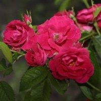 Цветочный хоровод-124. :: Руслан Грицунь