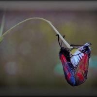 окно в природу :: Сергей Розанов