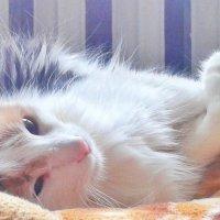 Наша кошка. :: Маша Кутняя