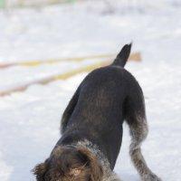 вкусный снег :: Елена Волгина