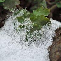 Взрывая снежные узы :: Денис Масленников