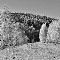 ИК весна :: Сергей
