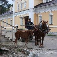 Жизнь за забором :: Леонид Сергиенко