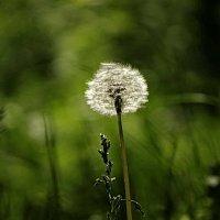 Травиночка-былиночка моя... :: Владимир Гилясев