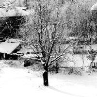 зима :: Наталья Булдакова