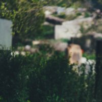 Немного о тюльпанах :: Лиля Ахвердян