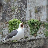 Птица певчая... :: Ольга
