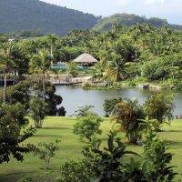 Тропический рай или Китай :: Татьяна Буркина