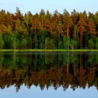 Лесное озеро :: НаталиКа