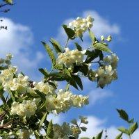 Цветет и пахнет .... :: Андрей Зайцев