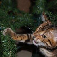 Кошка 1 :: morgo