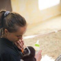 Кормление маленькой обезьянки :: Валентин Наталенко