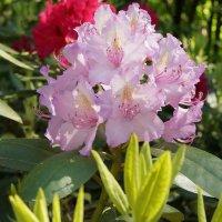 Цветы :: Михаил Новиков