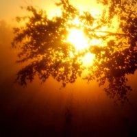 Июньские рассветы :: sergej-smv