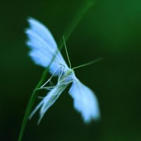 Ангел :: Анастасия Мельник