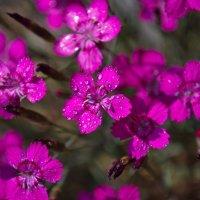 растения каменных горок :: Olena