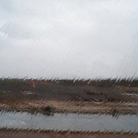 Проливной дождь :: Natalia Harries