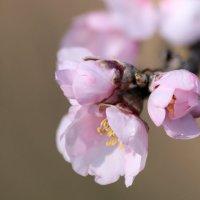 Воспоминание о весне :: Nyusha