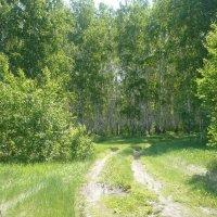 Свежая зелень :: натальябонд бондаренко