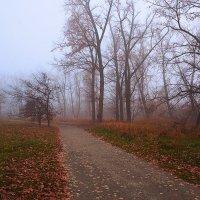 Осенний туман. :: Геннадий