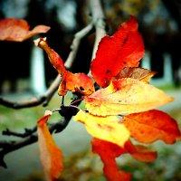 Осенние листья :: Zifa Dimitrieva