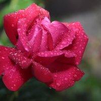 Цветочный хоровод-134. :: Руслан Грицунь