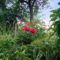 во саду ли, в огороде... :: Галина Филоросс