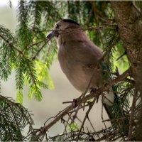 bird2 :: yameug _