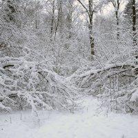 Зимний лес :: Роман Домнин