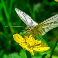 Бабочка :: Alex Bush